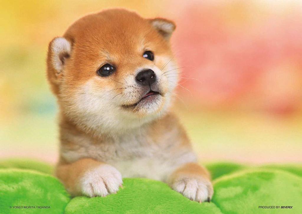 Beverly Jigsaw Puzzle P108-839 Shiba Puppy (108 Pieces)