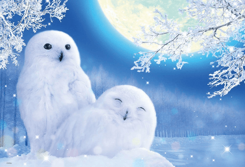 Beverly Jigsaw Puzzle M81-545 White Owl (1000 S-Pieces)