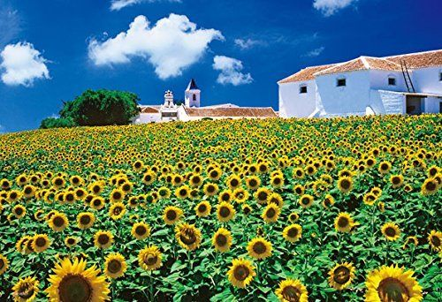 Beverly Jigsaw Puzzle M81-853 Andalucia Sunflower (1000 S-Pieces)