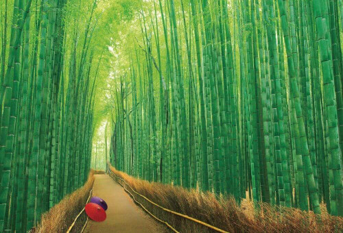 Beverly Jigsaw Puzzle 51-229 Japanese Scenery Bamboo Forest Sagano Kyoto (1000 Pieces)