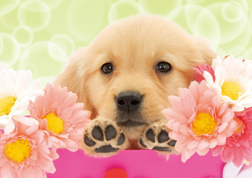 Epoch Jigsaw Puzzle 01-056 Golden Retriever with Flowers (108 Pieces)