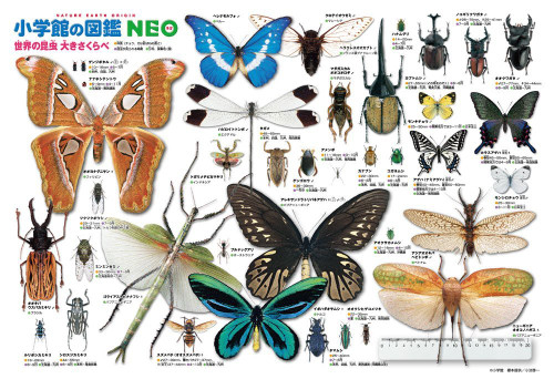 Beverly Jigsaw Puzzle L74-157 World Insects Encyclopedia (150 L-Pieces)