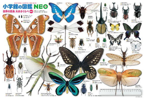 Beverly Jigsaw Puzzle B61-423 World Insects Encyclopedia (1000 Pieces)