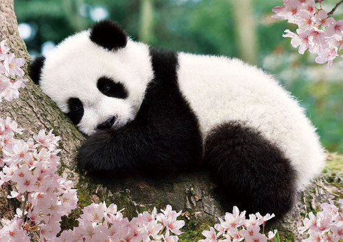 Epoch Jigsaw Puzzle 01-061 Sleepy Panda (108 Pieces)