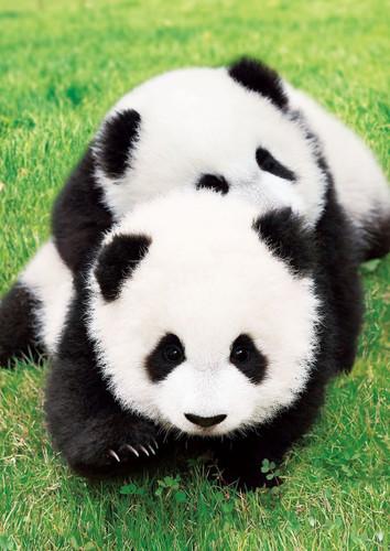 Epoch Jigsaw Puzzle 01-060 Good Friends Panda (108 Pieces)