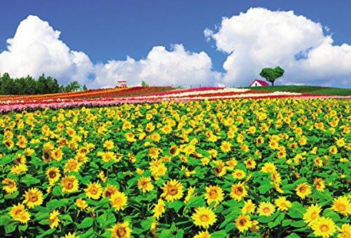 Beverly Jigsaw Puzzle 51-243 Sunflower Biei Hokkaido Japan (1000 Pieces)