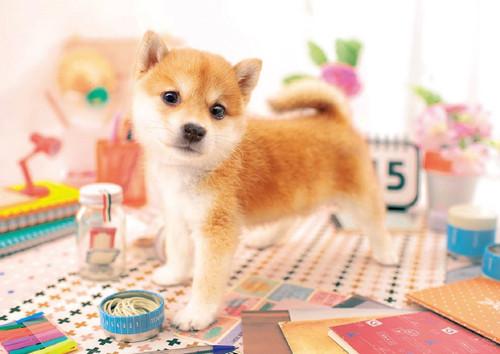 Epoch Jigsaw Puzzle 01-065 Pet Dog Shiba Inu (108 Pieces)
