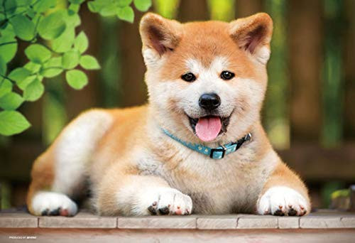 Beverly Jigsaw Puzzle P33-162 Pet Akita-inu Dog Come Here (300 Pieces)