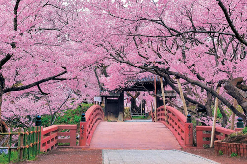Epoch Jigsaw Puzzle 10-805 Cherry Blossom, Takato Castle, Nagano (1000 Pieces)