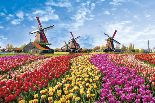 Yanoman Jigsaw Puzzle 10-1342 Tulip & Windmill (Netherlands) (1000 Pieces)