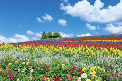 Yanoman Jigsaw Puzzle 10-1344 Furano, Flower Hill (Hokkaido) (1000 Pieces)