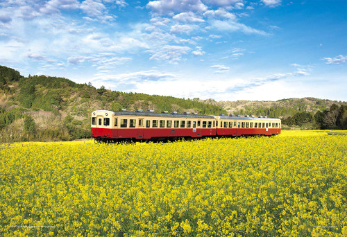 Yanoman Jigsaw Puzzle 03-898 Rapeseed Train (Chiba) (300 Pieces)