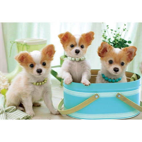 Apollo-sha Jigsaw Puzzle 48-613 Pretty Chihuahuas (300 Pieces)