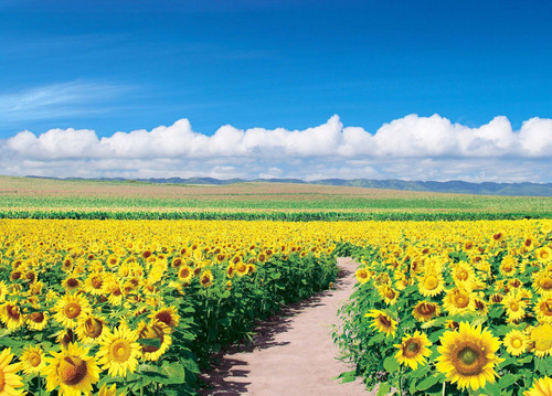 Epoch Jigsaw Puzzle 05-086 Japanese Scenery Sunflower Field Hokkaido (500 Pieces)