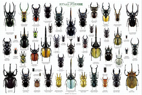 Epoch Jigsaw Puzzle 11-552 Beetle and Stag beetle Picture Book (1000 Pieces)