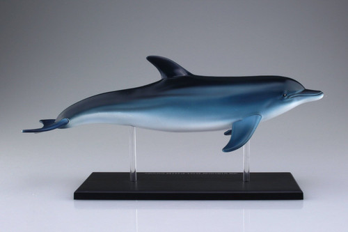 Aoshima 4D Vision No.7 Dolphin Anatomy Model Non-scale Kit
