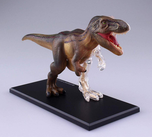 Aoshima 4D Vision No.22 T-Rex Anatomy Model Non-scale Kit