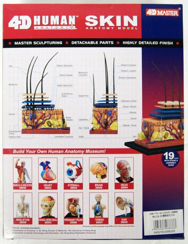 Aoshima 88333 4D Vision Human Anatomy Model No.18 Skin Non-scale Kit
