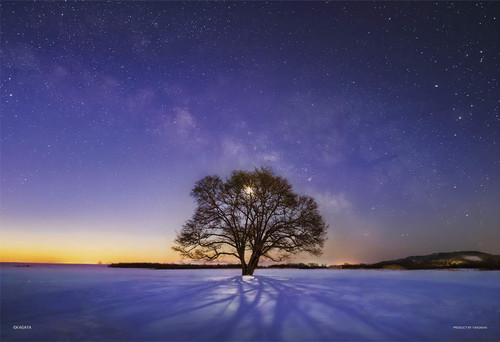 Yanoman Jigsaw Puzzle 03-906 KAGAYA Harunire Tree & Milky Way Hokkaido (300 Pieces)