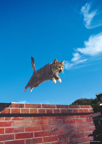 Epoch Jigsaw Puzzle 03-025 Jumping Cat (108 Pieces)