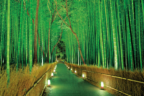 Epoch Jigsaw Puzzle 23-546 Light Up Bamboo Forest in Sagano (2016 S-Pieces)