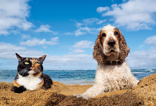 Epoch Jigsaw Puzzle 26-260 Cat and Dog By The Beach (300 Pieces)