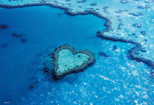 Beverly Jigsaw Puzzle 33-176 Heart Reef Island (Australia) (300 Pieces)