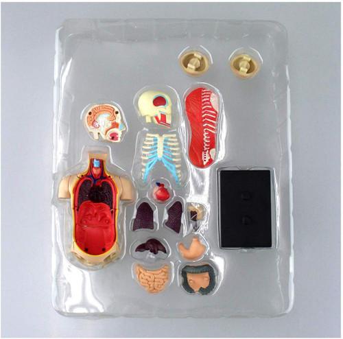 Aoshima 107119 4D Vision No.01 Torso Anatomical Model Non-scale Kit
