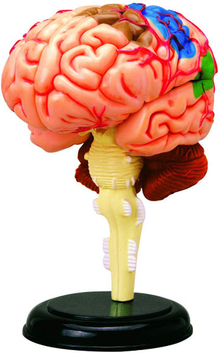 Aoshima 107133 4D Vision No.12 The Brain Model Non-scale Kit