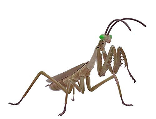 Fujimi 170978 Biology Research No 23 EX1 Tenodera Aridifolia Brown (Japanese Giant Mantis) Model Kit