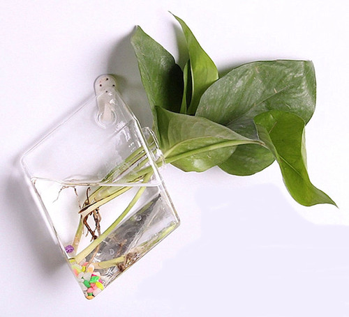 Terrarium / Hydroponic Glass Planters Wall Hanging Flower Vase - Style N