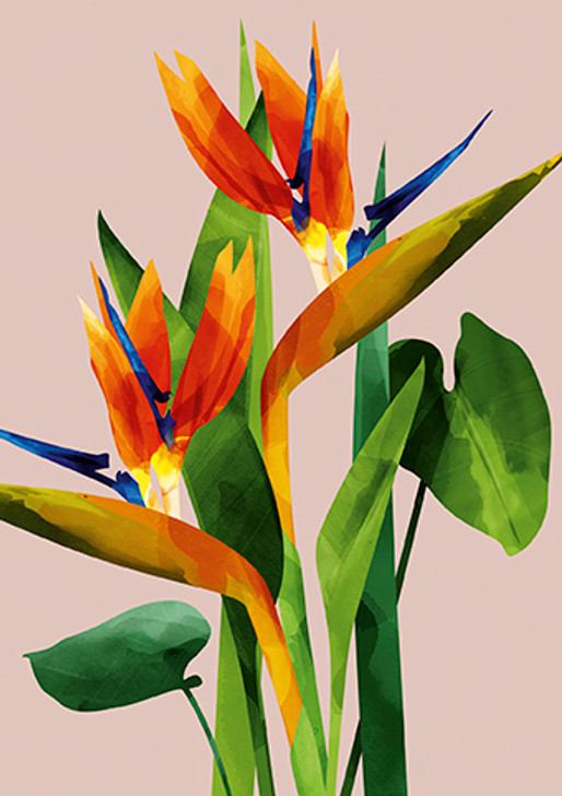African themed Greeting Card depicting the Bird of paradise flower that is native to South Africa.