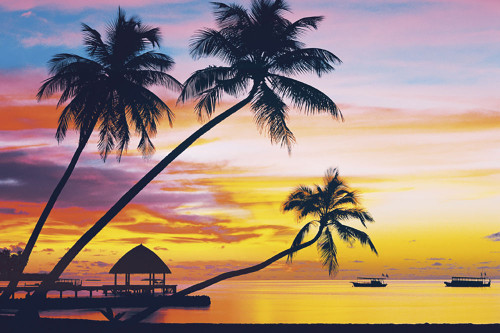 Velvety Tropical Sunset Poster.