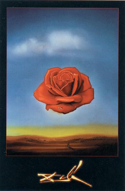 Dali Meditative Rose.