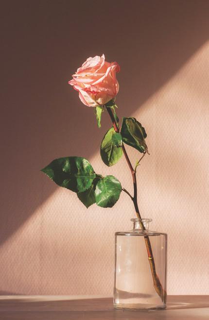 Rose in Vase.