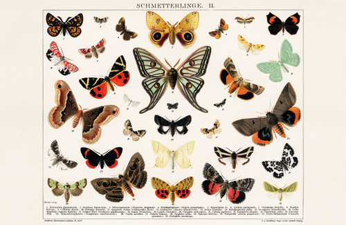 Vintage illustration of different species of butterfly.
