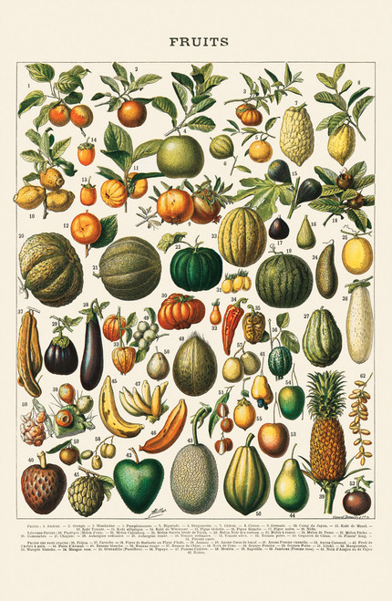 Vintage fruits illustration by Adolphe Millot.