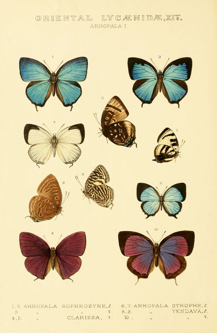 Vintage butterfly illustration.