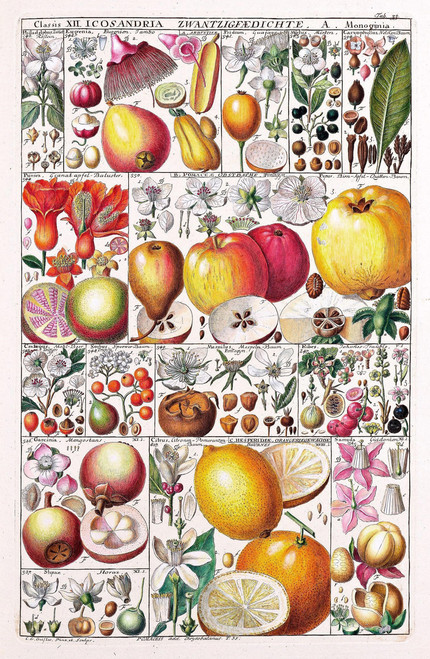Vintage fruits illustration table.
