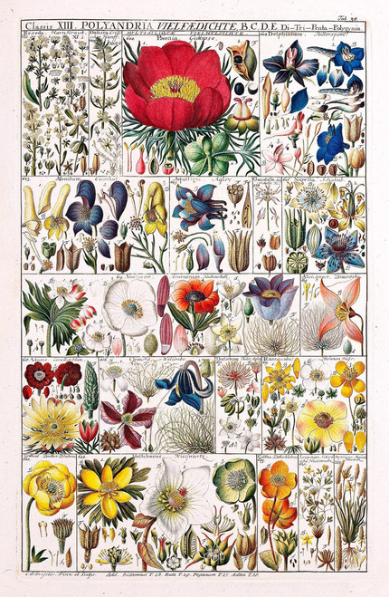 Vintage illustration of a flower identification chart.