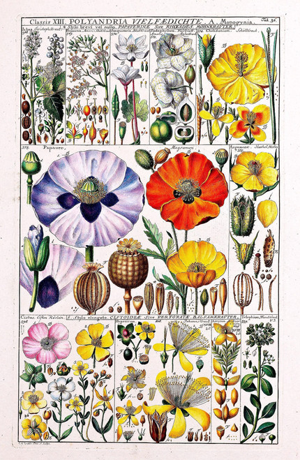 Vintage flower illustration chart.