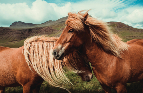 Two horses hugging in a field.