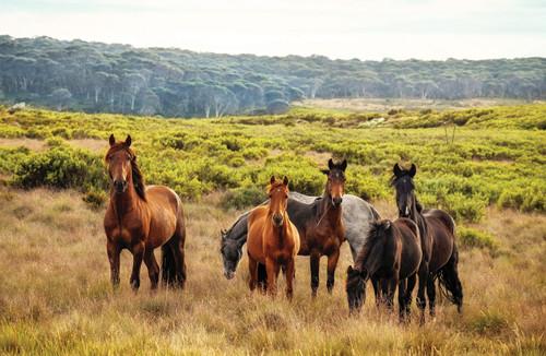 Herd of horses in a field.