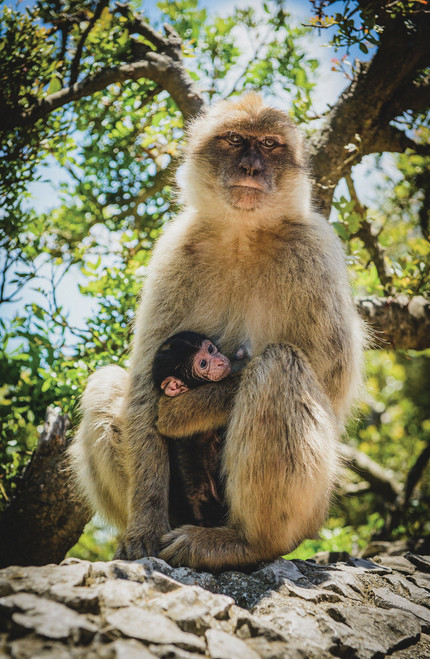 Photo of a monkey and baby monkey.