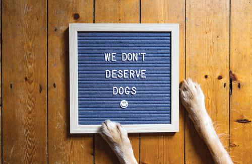 We don't deserve dogs letter board.