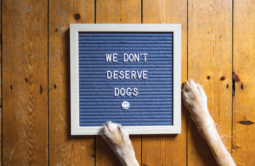 We don't deserve dogs letter board.