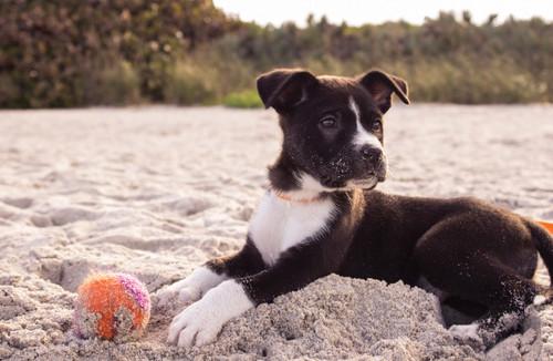 Puppy on the beach.