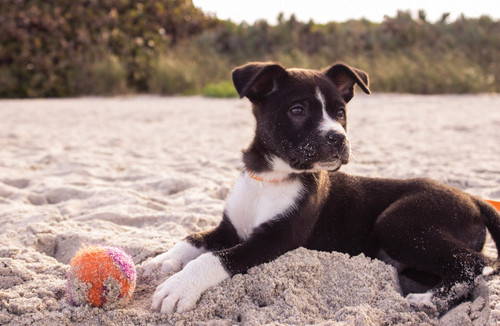 Puppy on the beach.