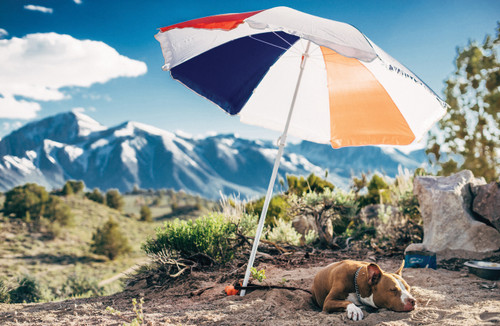 Photo of a dog under an umbrella in front of mountains.