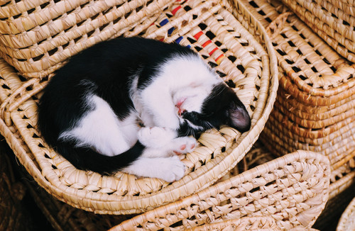 Kitten sleeping in a basket.